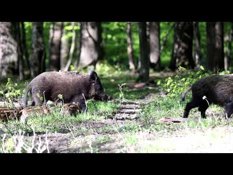 Video Čergov -  selata na cestě