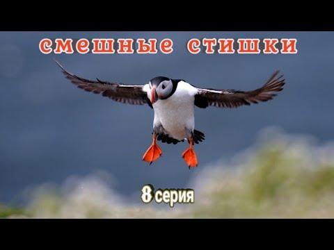 Смешные стишки к видео (8 серия) - YouTube