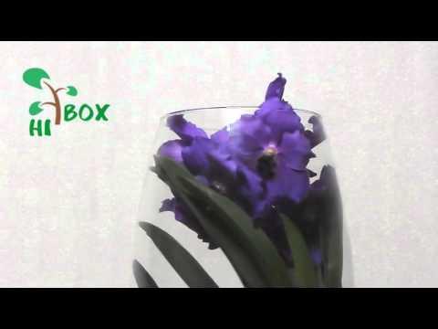 Орхидея Ванда Синяя в стеклянной вазе. Магазин ХайБокс