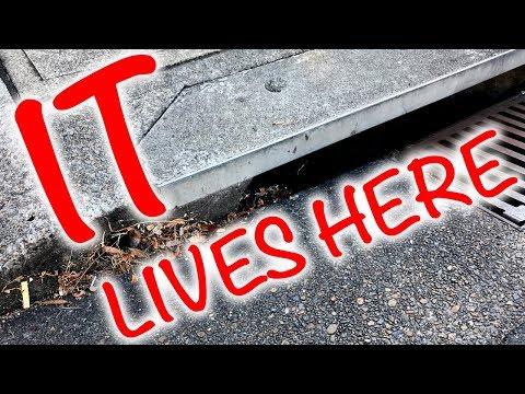 IT Lives Here Drain Spider Feeding & Infestation
