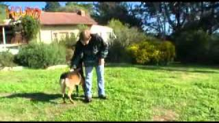 Dog Training-advanced Obedience-www.sidneyaarons.com.au