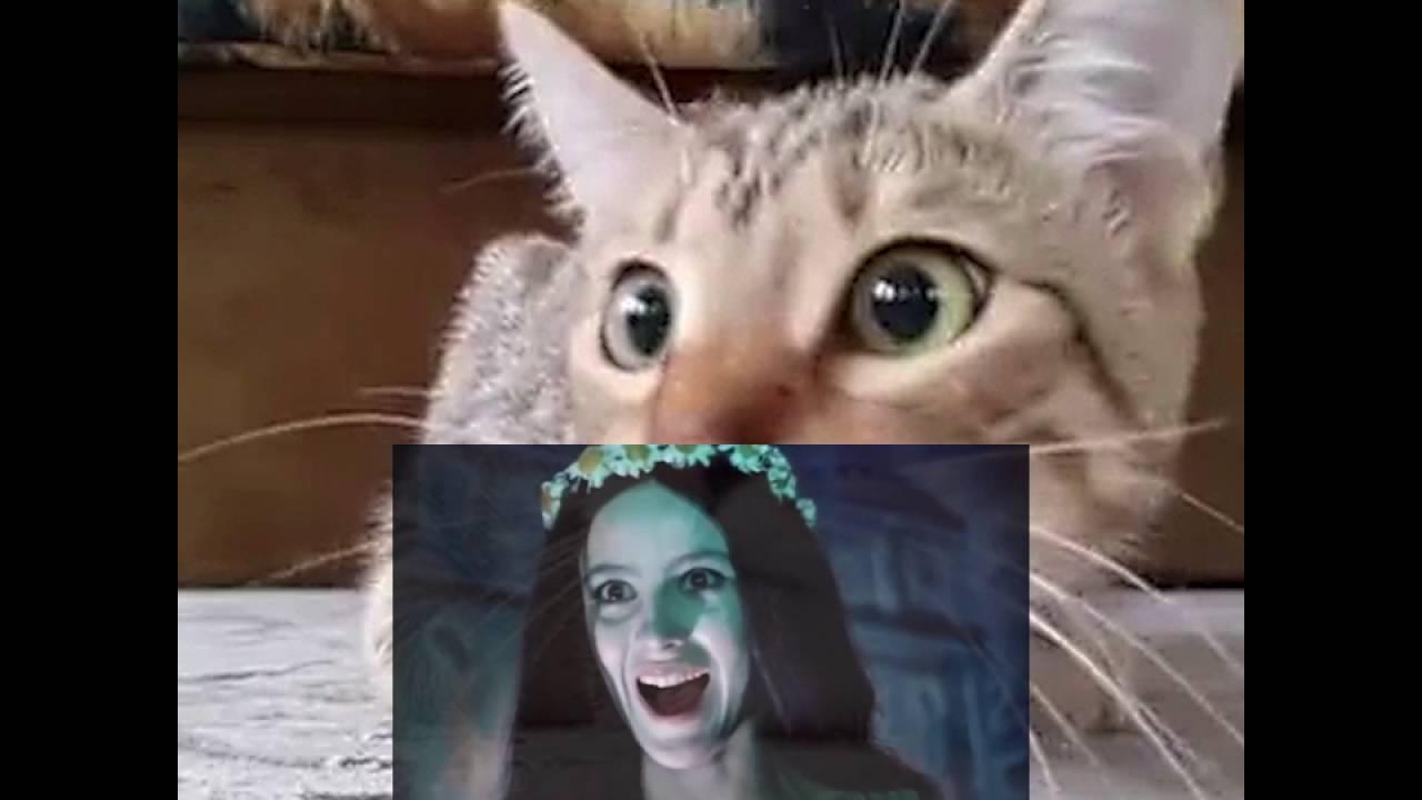Коты смотрят страшилки