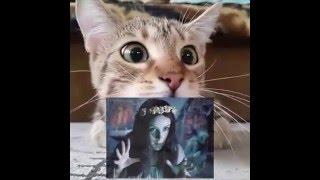 Кот смотрит советский фильм ужасов