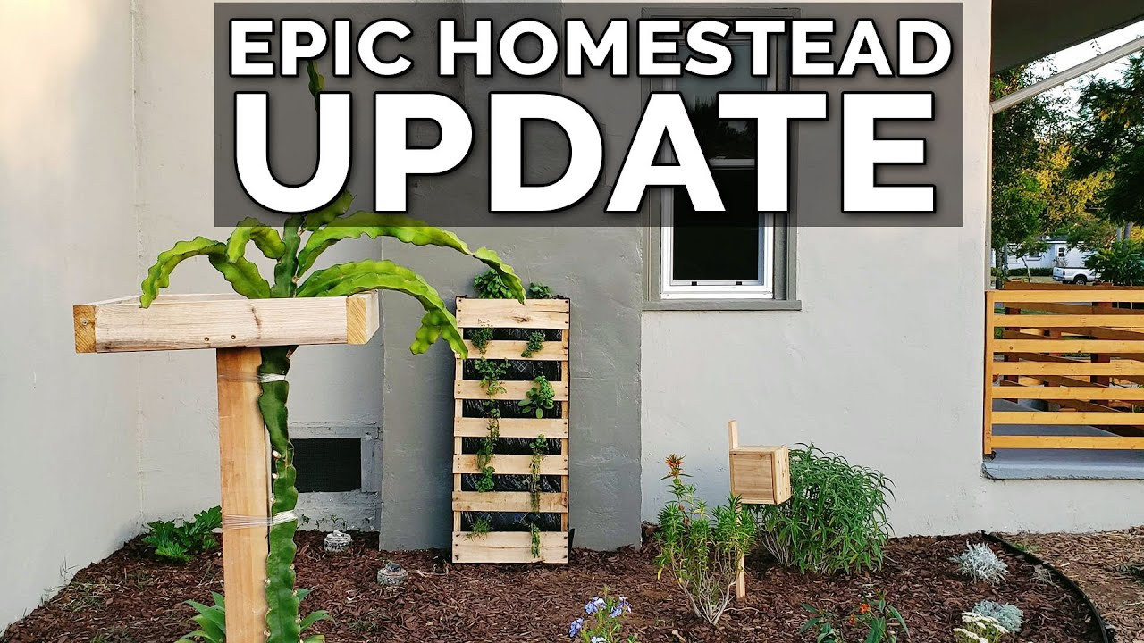 Epic Urban Homestead Tour | 1 Month Update