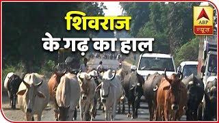 MP Polls: Reality Of Development In Sehore And Budhni | Narmada Yatra | ABP News