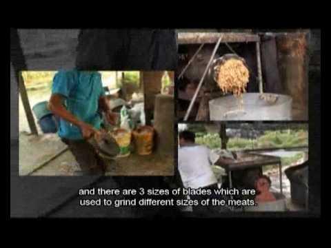 malaysia walking catfish documentary - YouTube - photo#2