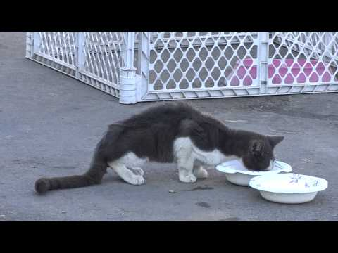 Stray Kitten Hurt Dying Cat Raining in SD so no Cars yet Help save a Animal Video Extra Footage