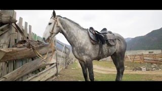 конный пробег