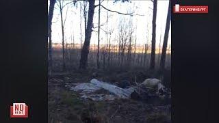 Останки домашних животных свалили в лесу