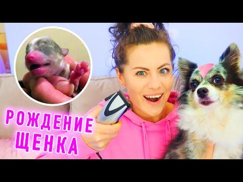 Брею Софи! 50 фактов о моей собаке и как родился щенок? День Рождения собаки Софи
