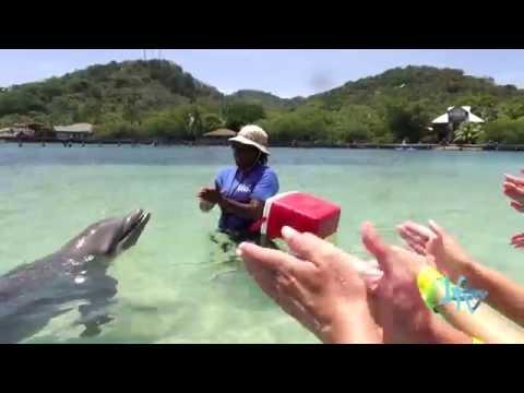 La Televisión desde Honduras. Roatán. Buceo, Delfines LA TV ECUADOR 06/07/14
