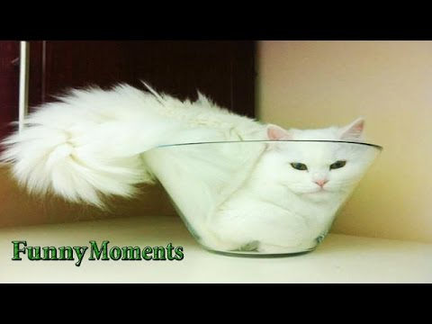 Funny Cats vs Small Spaces | Funny Compilation 2016