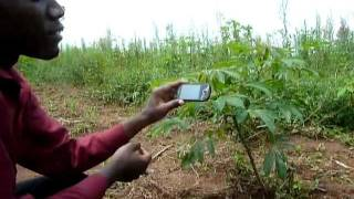Crop disease diagnosis on smartphone