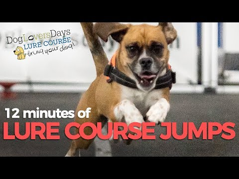 Best Compilation of Action Shots of Dogs Jumping and Running