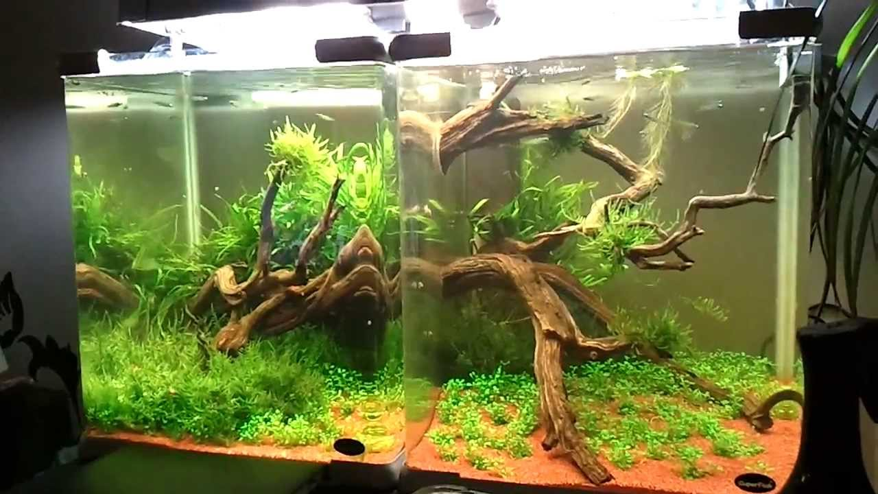 Superfish aquarium fish tank aqua 40 - Double Aqua Qube 40 Divided By Zero Aquascape