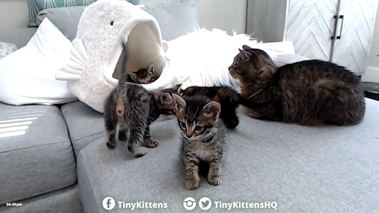 Kittens meet Grandpa Mason!  TinyKittens.com
