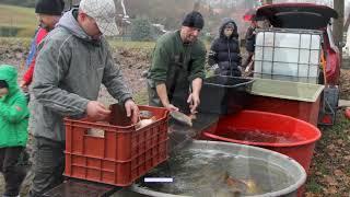 18 11 24 Výlov rybníku v Jiníně