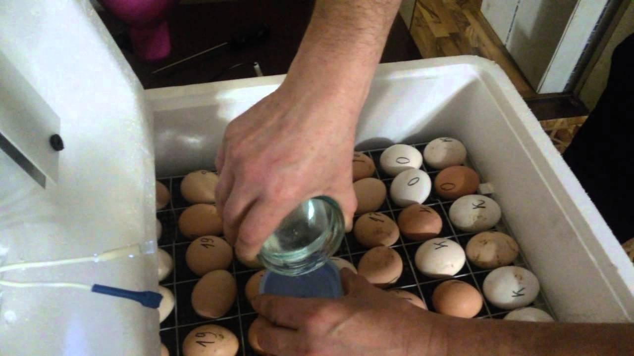 Инкубация куриных яиц. Изменение режима инкубации и овоскопирование яиц. Часть 3