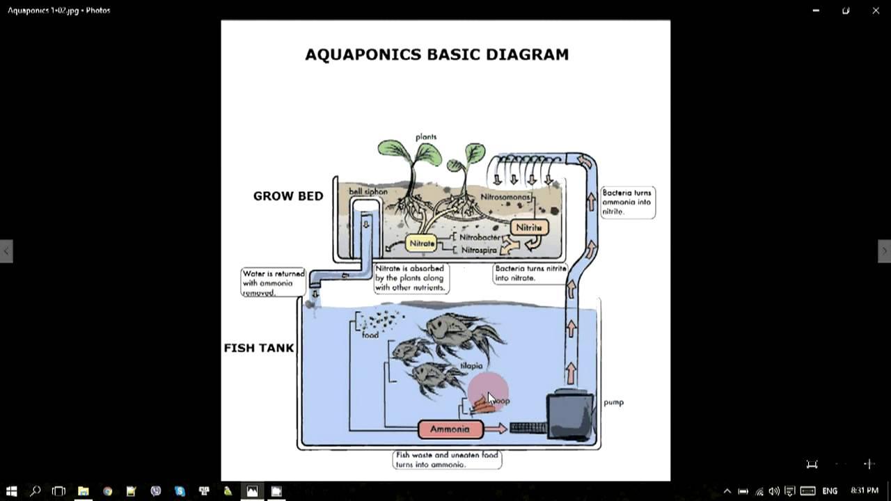 Israel Agrostudies Aquaponics At Kibbutz Ein Karmel Part 01