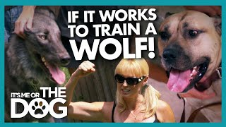 Trained Wolf Teaches Owner the Dangers of 'Dominating' Your Dog | It's Me or The Dog
