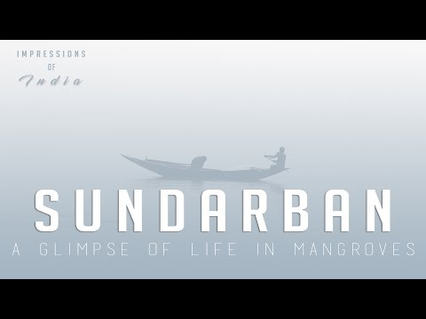 Impressions of India Ep 10 | A glimpse of life in the Mangroves