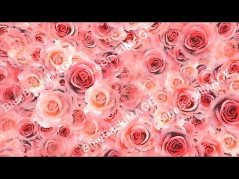 著作権フリー 映像素材 花 バラ Flower Rose P1s Youtube