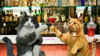"""Сat cafe in Moscow. Клуб """"Kotomania"""". Котокафе Чистые пруды. Cats & Relax Club"""