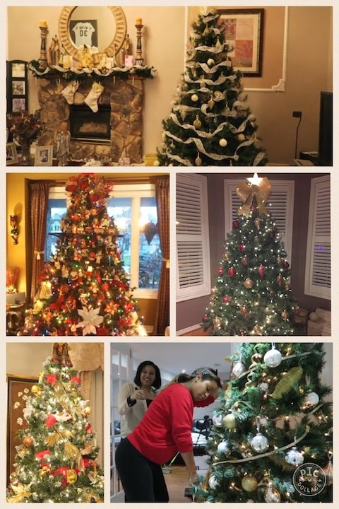 5 types of christmas trees - Kinds Of Christmas Trees