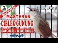 Ciblek Gunung Full Ngebren Non Stop Bagus Buat Masteran  Mp3 - Mp4 Download