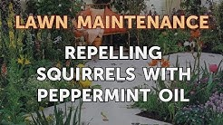 Repelling Squirrels with Peppermint Oil