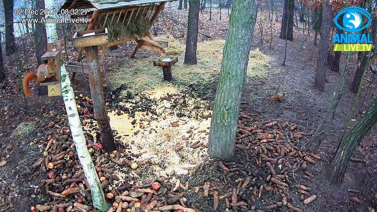 🐿️ Wiewiórki w karmisku 🏆 w lesie na Podkarpaciu