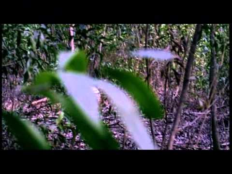 น้ำตาลแดง 2 [Official Trailer]