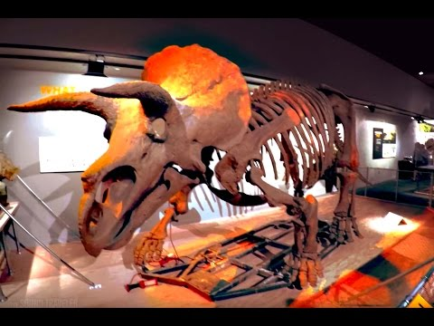 National Museum of Natural History - The Sound Traveler 2