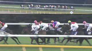 2010.11.28 第30回ジャパンカップ(G1) ローズキングダム