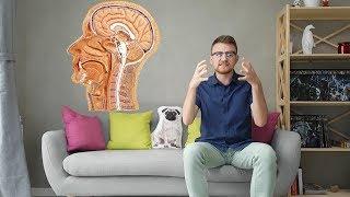 Анатомия мозга. Строение частей головного мозга человека. Мозг часть 2.