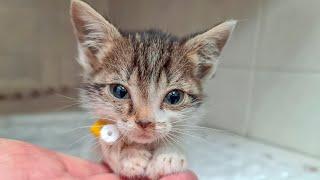 Кот Мао спасает жизнь котенка Малявочки найденного  в подъезде the cat saves the kitten