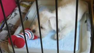 2006年2月23日にわが家にやって来た愛犬の回顧録。 ☆http://blog...