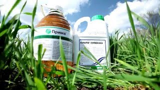Правила складского хранения семян и средств защиты растений