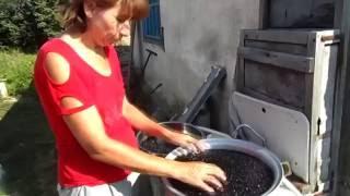 Настойка из черноплодной рябины (классический рецепт)
