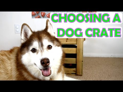 HUSKY RATES THE CRATE | A Dog's Guide to Choosing the Perfect Crate