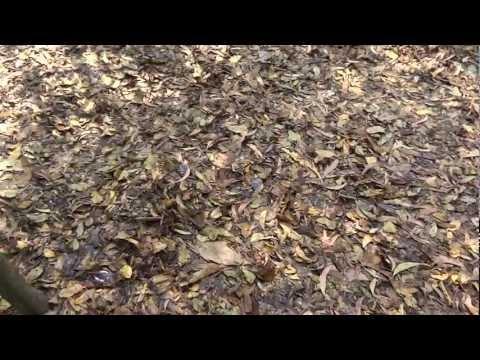 Прогулка по хайдаркану фото видео