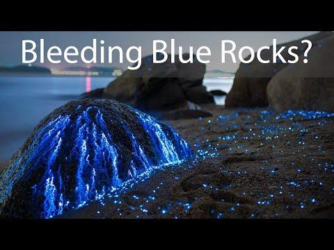 Bio-Luminescent Shrimp Makes These Rocks Look Like They Are Bleeding Blue