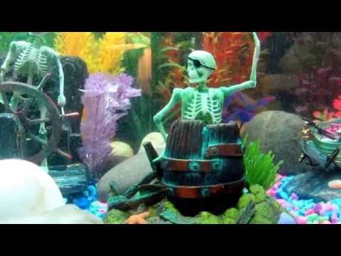 Freshwater Fish Tank With Several Penn Plax Action Air Toys