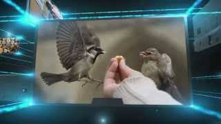 Скачать Meaning Of A BIRD IN THE HAND IS WORTH TWO IN THE BUSH
