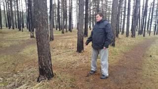 Прогулка с Володей 1 сезон 6 серия