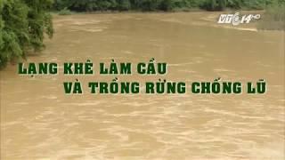 VTC14 | Lạng Khê làm cầu và trồng rừng chống lũ