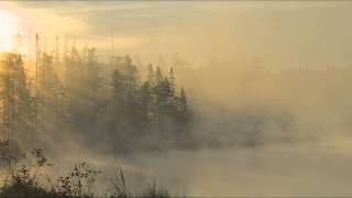Andreas Vollenweider - Leaves Of The Great Tree