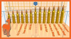 1000 Yard Savage Axis Rifle: Which Cartridge is Best? | The Social Regressive