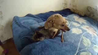 Прикол! Кошка против собаки. Любовь между кошкой и собакой
