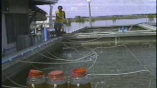 Hatchery/Nursery Production of Prawn Fry